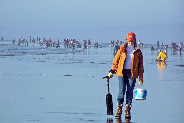 Clam Digging in Seabrook