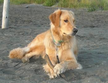 Seabrook beach dog