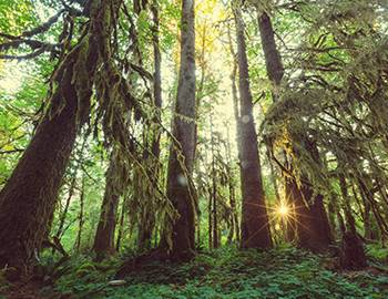 The Hoh Rainforest is located 100-miles north of Seabrook