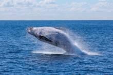 Whales on the Washington Coast