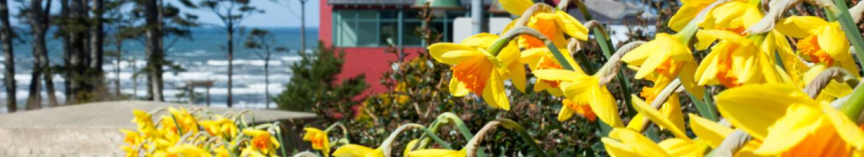 Spring at Seabrook